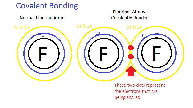 Chemical Bonds Anatomy Physiology