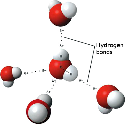 hydrogen bonds in water